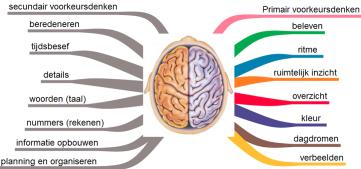 hersenhelften beelddenken